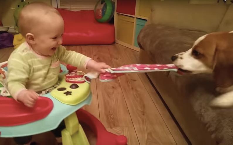 De 506 beste viral video's van 2015 in 21 minuten