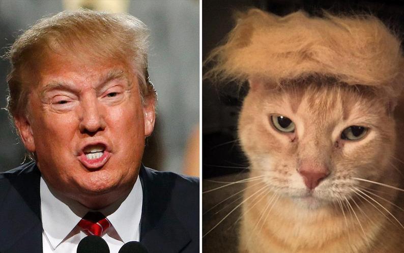 Trump the king of social