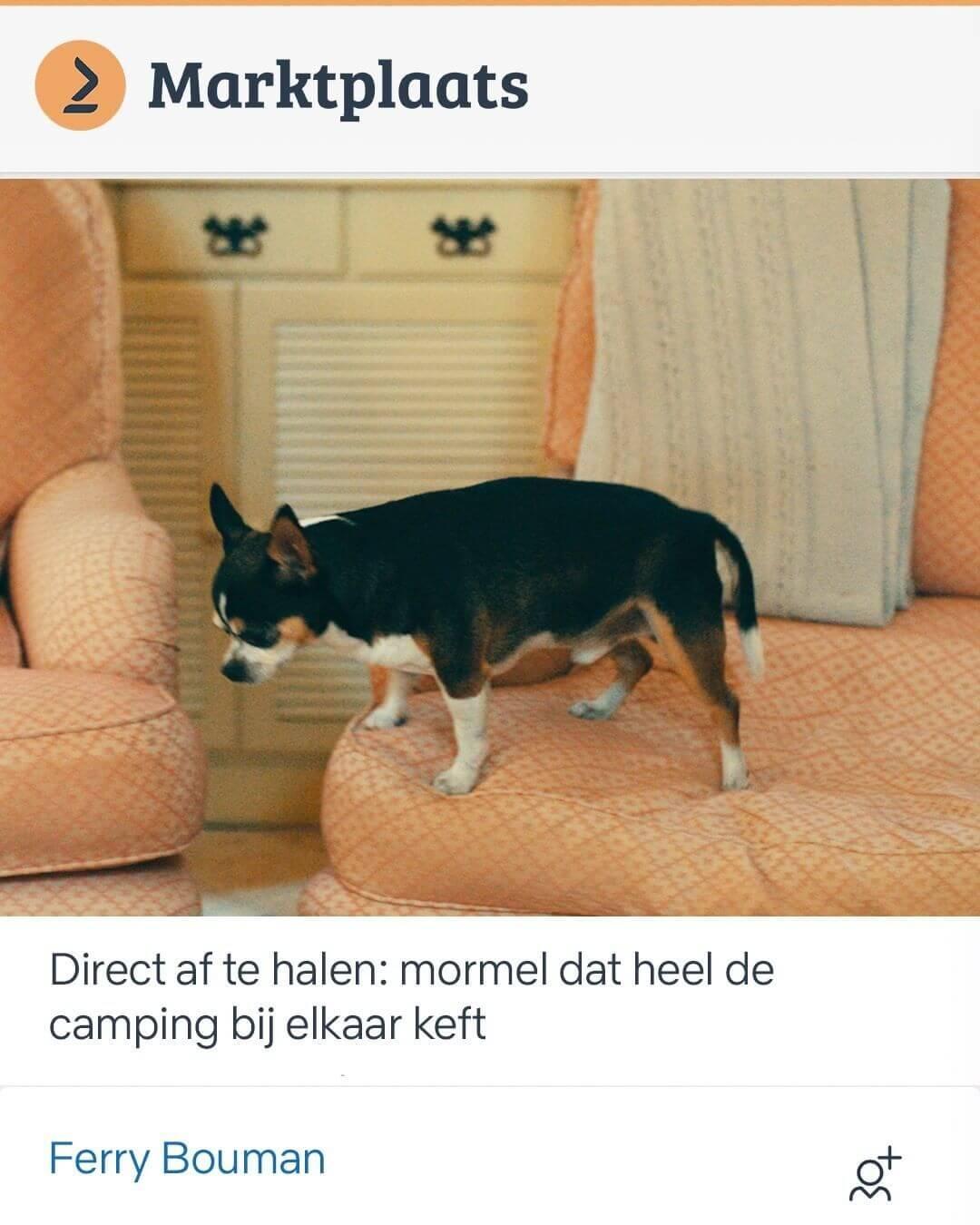 WeDigital_Koningsdag_Inhakers_Netflix